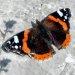 54200-butterfly.jpg